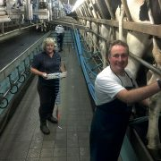 Dairy pregnancy test helps optimise milk margins