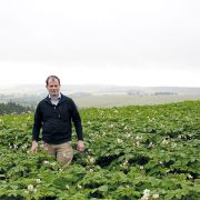 Seed potato exporters take action after Brexit devastates business