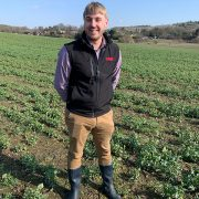 Check oilseed rape crops and rectify boron deficits