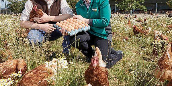 Morrisons helps egg producers create biodiverse farmland