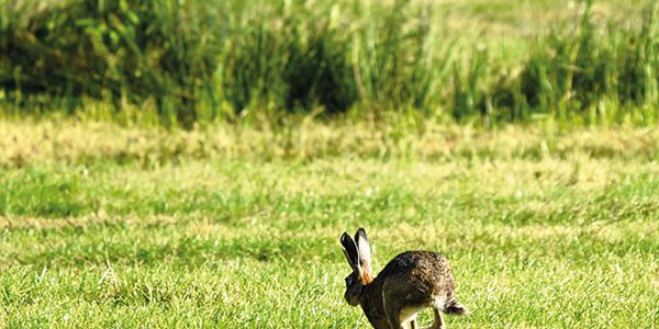 Operation Galileo sees police combat hare coursing gangs