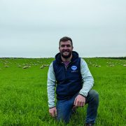 Forage crops help optimise output
