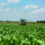 Get the most from sugar beet crop