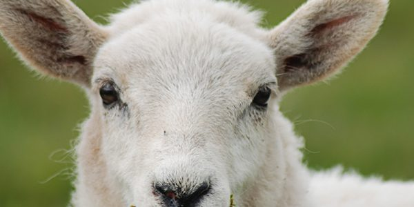 NSA launch Register of Sheep Advisers