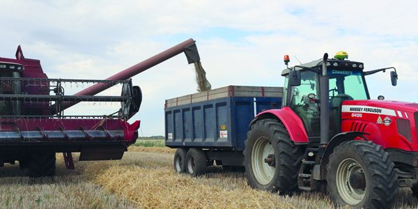 Hybrid rye catches eye of first-time growers