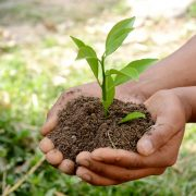 What is conservation agriculture?