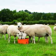 Supplements can get more from your forage