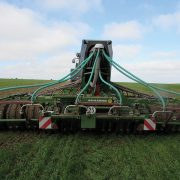 Accurate application still key to blackgrass conundrum