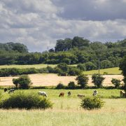 Changing land use offers opportunities for farmers