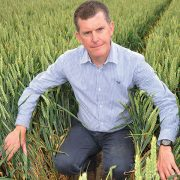 Stay alert to Septoria, wheat growers urged