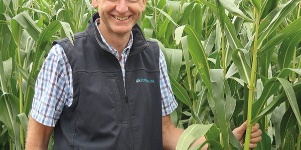 Drought-hit grassland could benefit from forage maize