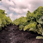 Post-emergence herbicide has 'added significance'