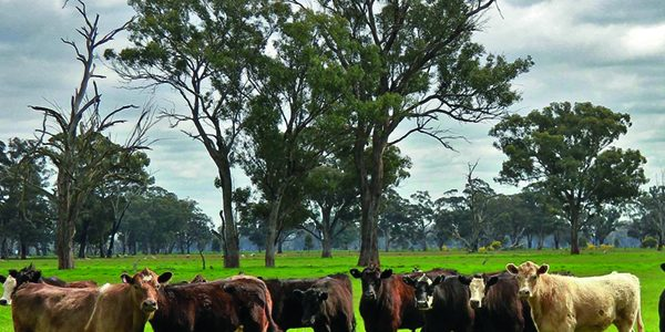 Australia free trade deal is 'bad for beef'