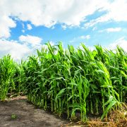 Poor weather drives up commodity prices