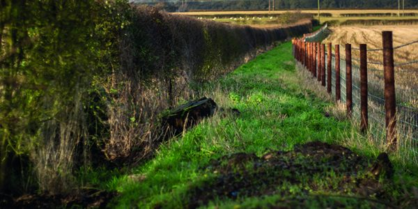 Success for scheme that pays farmers to reduce pollution