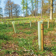 Woodland Trust to end plastic tree guard use